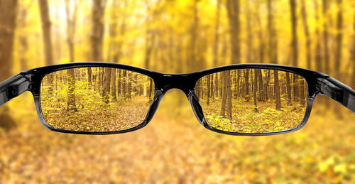 glasses-forest